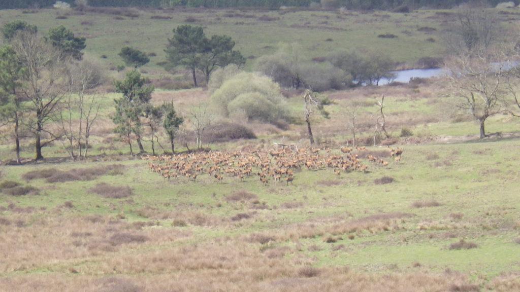 chasse, affut, approche, battue, chasse en montagne, cerf, daim, chevreuil sanglier, mouflons