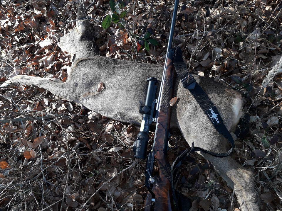 daim, cerf, chasse, tir en montagne, sangle carabine, fusil,